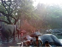 Guruvayur and elephant tour