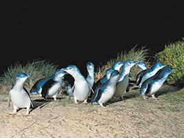 Penguins Express