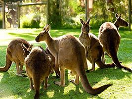 Wildlife Encounters: Healesville Sanctuary