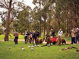 Sovereign Hill with wildlife