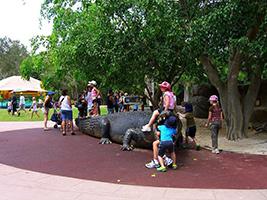Croc Express to Australia Zoo