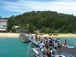 Tangalooma Dolphin Adventure