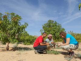 Egyptian Farming