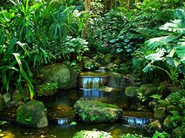 Half Day Botanical Garden and Spice Garden