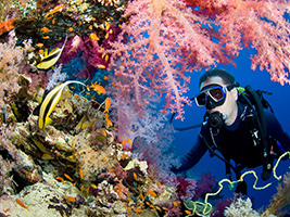 Intro Dive in Ras Mohamed: 2 Dives