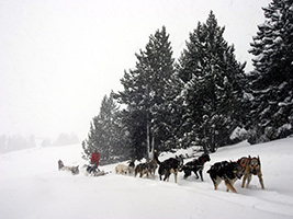 Mushing Pirineus - La Caubella Pal Sector