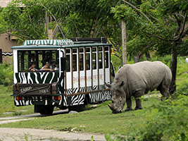 Full Day Safari Tour - Jungle Hopper Package