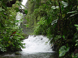 Private Mindo Cloud Forest Tour - Ecotourism and Adventure