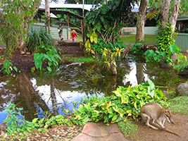 Kuranda Rainforestation with Australian Butterfly