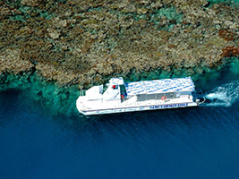 2 Day Combo - Reef Magic and Grand Kuranda with Transfer