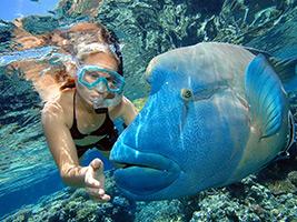 2 Day Combo - Reef Magic and Grand Kuranda