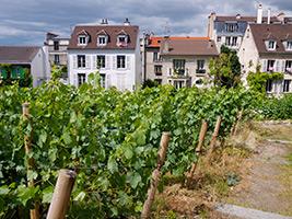 VIP Tour of Montmartre - Paris