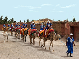 Camel Caravan with Lunch