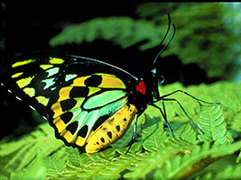 Australian Butterfly Sanctuary Entry with Guided Aviary & Lab Tour