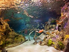 Sea Life Dallas