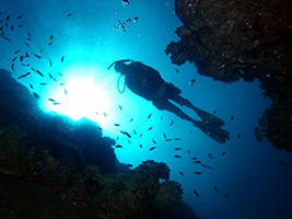 Great Barrier Reef with Reef Magic Cruises with 2  Certified Scuba Dives