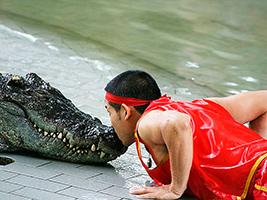 Pattaya Crocodile Farm - Ticket Only