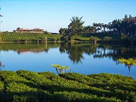 Mauritius Tea Route
