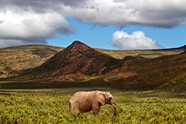 Wildlife Safari Tour