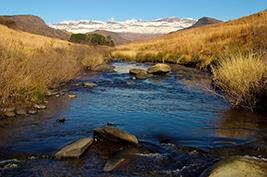 Drakensberg World Heritage Full Day Tour